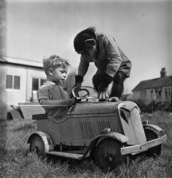 Suburbs Photograph - Monkey Business by Charles Hewitt