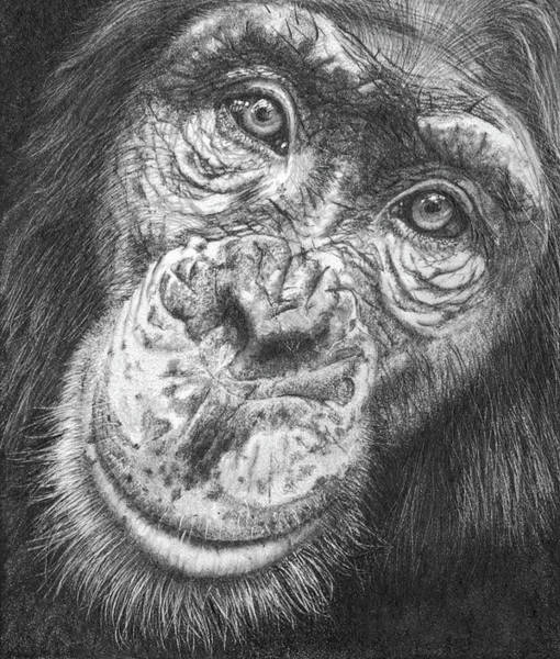 Drawing - Monkey Business by Peter Williams