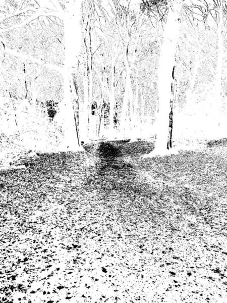Photograph - Monochromatic Forest Trees In Highgate Woods 53 by Artist Dot