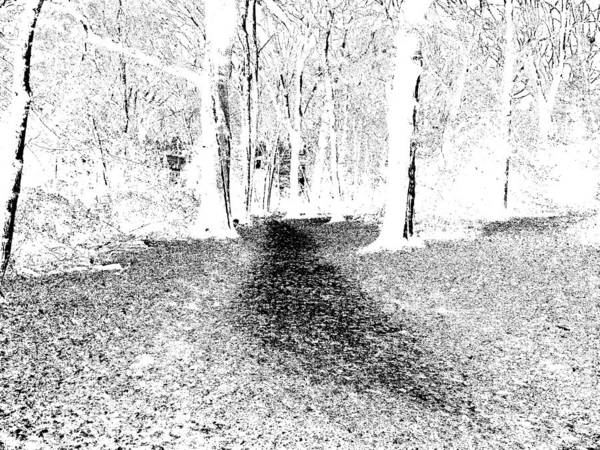 Photograph - Monochromatic Forest Trees In Highgate Woods 54 by Artist Dot
