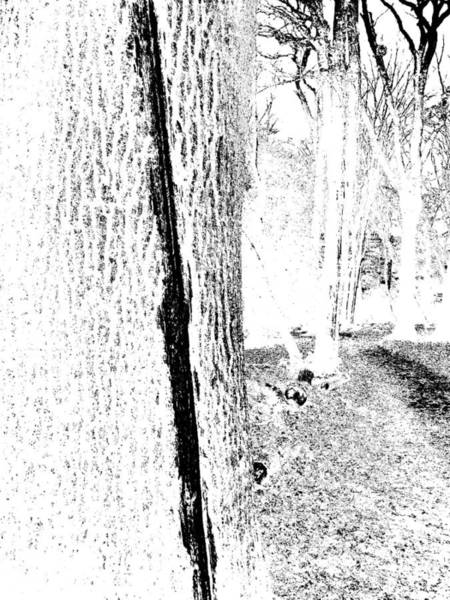 Photograph - Monochromatic Forest Trees In Highgate Woods 55 by Artist Dot