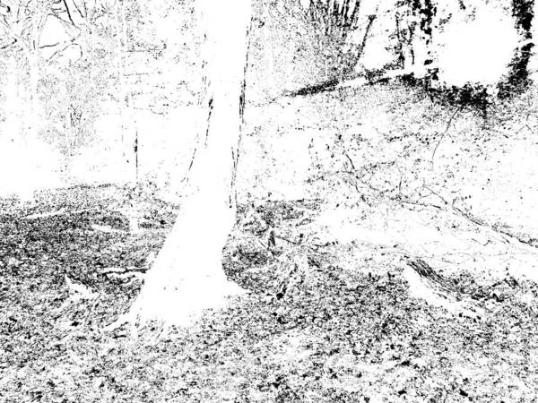 Photograph - Monochromatic Forest Trees In Highgate Woods 59 by Artist Dot