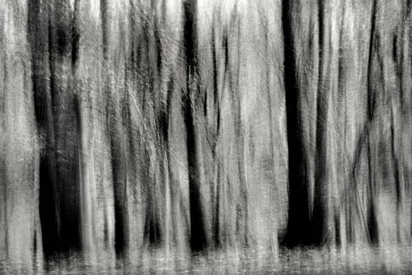 Photograph - Monochrome Forest Swipe by Don Johnson