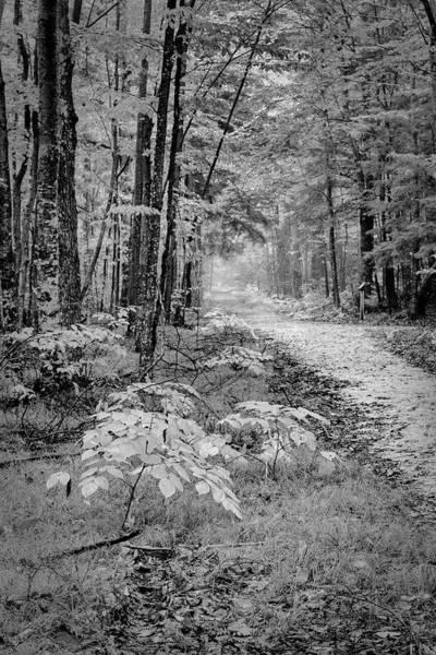 Photograph - Monotone Fog by David Heilman