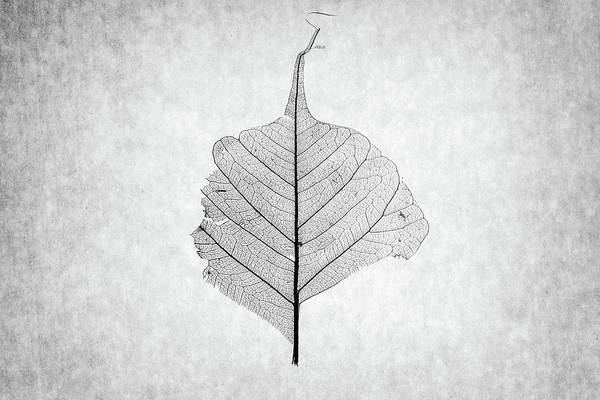 Wall Art - Photograph - Monotone Leaf One Of Three by Christopher Johnson