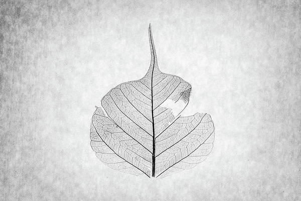 Photograph - Monotone Leaf Three Of Three by Christopher Johnson