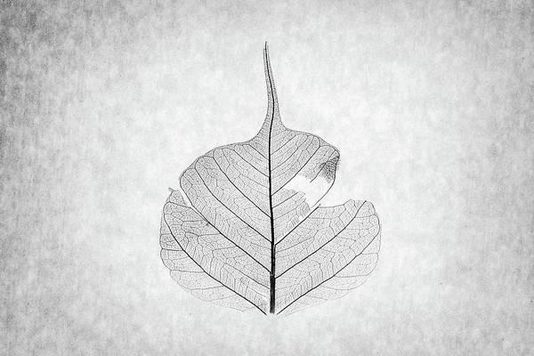 Wall Art - Photograph - Monotone Leaf Three Of Three by Christopher Johnson