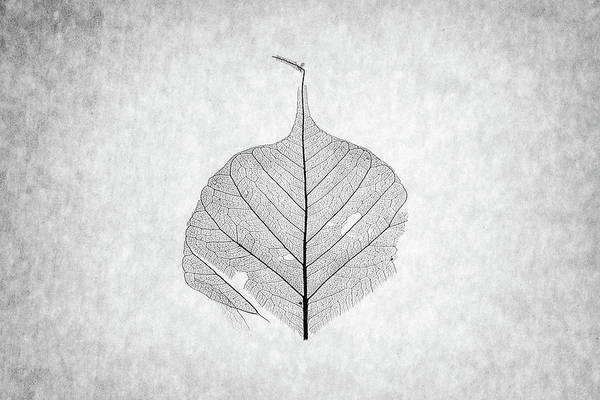 Photograph - Monotone Leaf Two Of Three by Christopher Johnson
