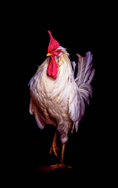 Rooster Photograph - Monsieur Le Coq by Maggie Terlecki