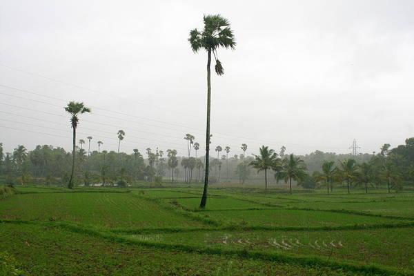 Kerala Photograph - Monsoon Rains In Palakkad Kerala by Dotcompalsphotoblog.com