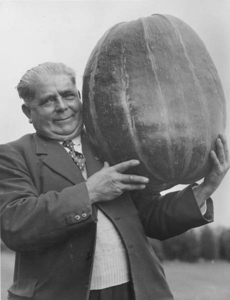Scale Photograph - Monster Marrow by Johnson