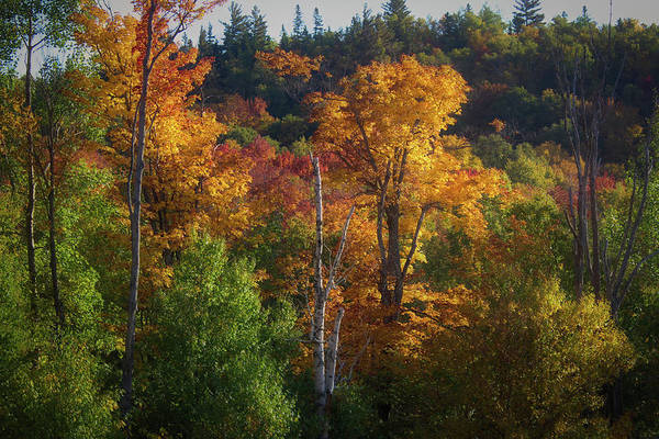 Photograph - Mont Tremblant Fall Foliage by Andy Konieczny