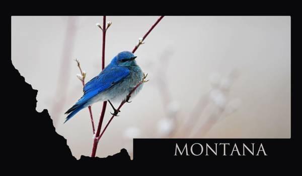 Wall Art - Photograph - Montana Bluebird by Whispering Peaks Photography