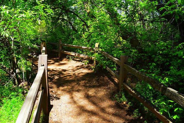 Photograph - Montane Botanic Garden Path by Glenn McCarthy Art and Photography