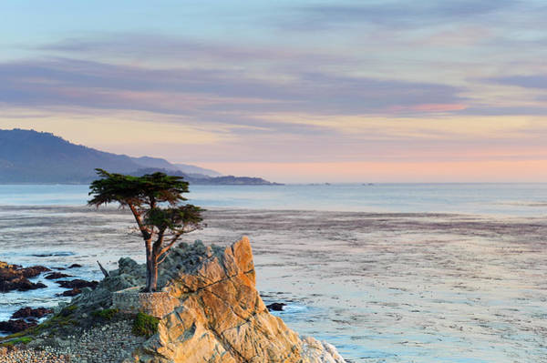 Rock Formation Photograph - Monterey Peninsula, Lone Cypress by Michele Falzone