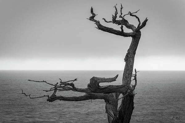 Photograph - Monterey Peninsula V Bw by David Gordon