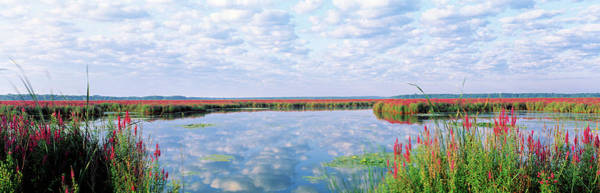 Wall Art - Photograph - Montezuma National Wildlife Refuge, New by Panoramic Images