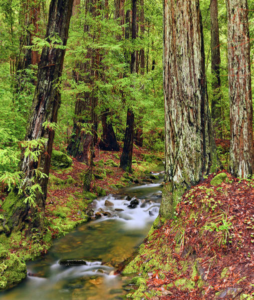 Eloquent Wall Art - Photograph - Montgomery Woods Old Growth by Leland D Howard