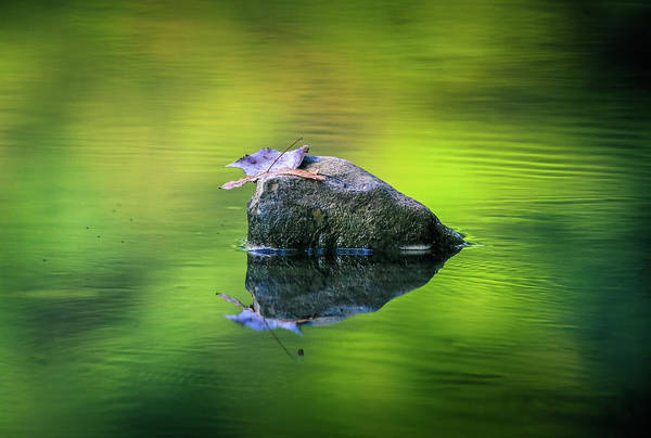 Photograph - Moody Green Reflection by Dan Sproul
