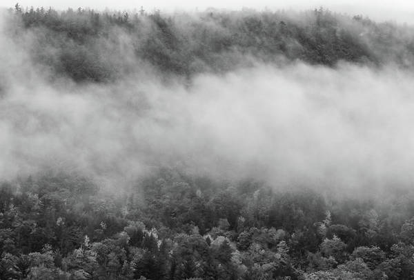 Photograph - Moody Morning In The White Mountains by Dan Sproul
