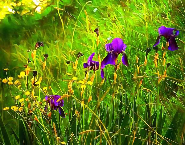 Photograph - Moody Purple Iris by Dorothy Berry-Lound