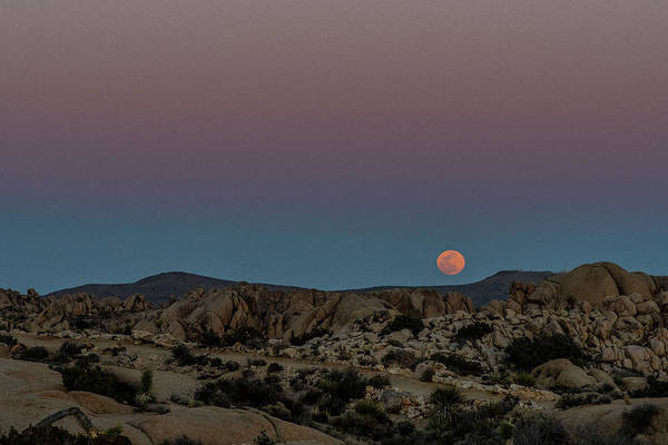 Photograph - Moon Above Joshua Tree by Matthew Irvin