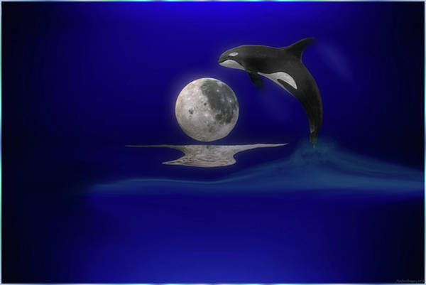Save The Whales Wall Art - Digital Art - Moon Dance by Ashley Mills