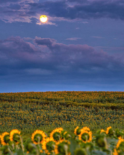 Photograph - Moon Flowers by Rod Best