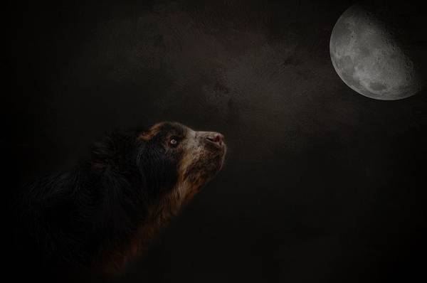 Photograph - Moon Gazer by Kelley Parker