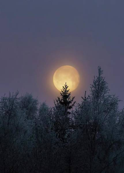Photograph - Moon Light by Rose-Marie Karlsen