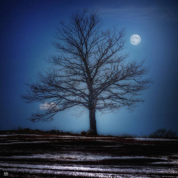 Photograph - Moon Over Liberty Tree by John Meader