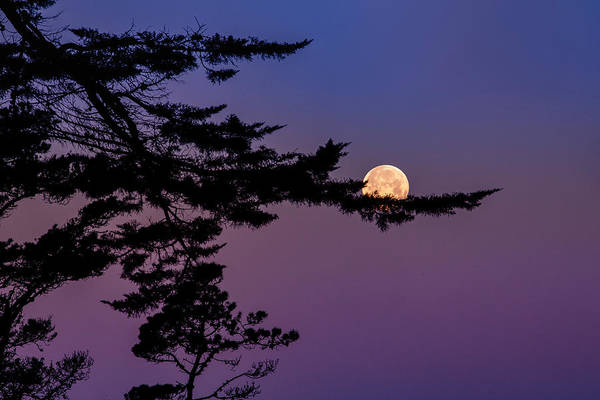 Wall Art - Photograph - Moon Stuck by Vincent James