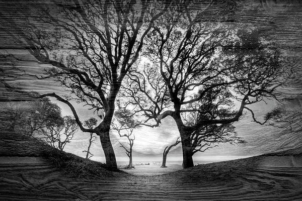 Wall Art - Photograph - Moondance In Black And White by Debra and Dave Vanderlaan