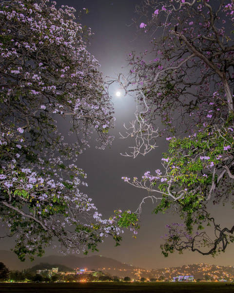 Photograph - Moonlight And Magic by Rachel Lee Young
