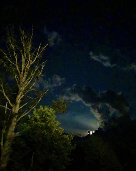 Photograph - Moonlight In The Trees by JimO Ogilvie