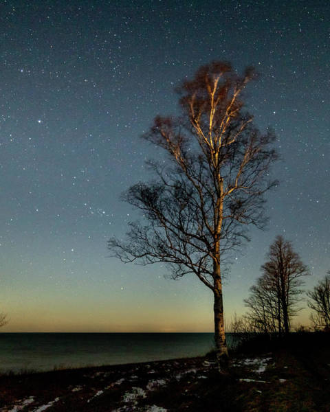 Photograph - Moonlit Tree by Rod Best