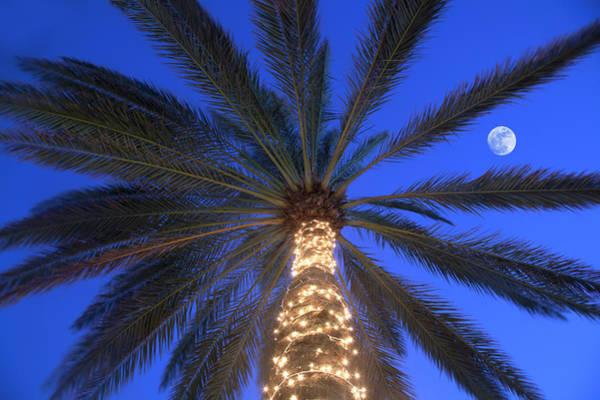 Christmas Lights Photograph - Moonrise Near Lit-up Palm Tree by Grant Faint