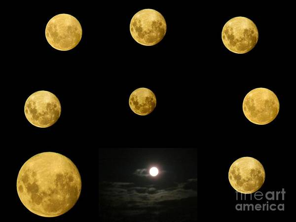 Photograph - Moons  by Joyce Woodhouse