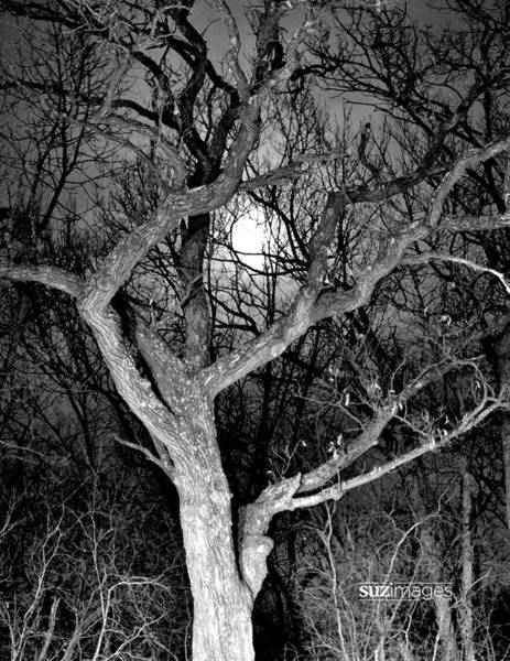 Photograph - Moonshine 2 by Susie Loechler