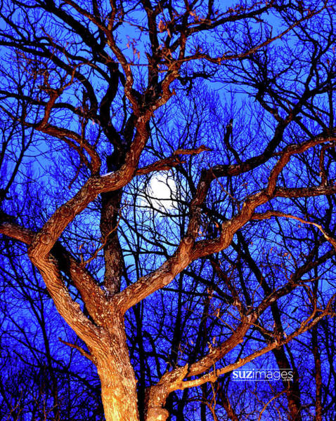 Photograph - Moonshine by Susie Loechler