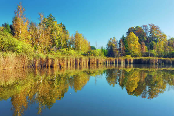 Moored Photograph - Moor Pond With Birches In Autumn by Frank Krahmer
