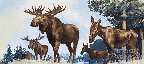 Wall Art - Painting - Moose Family by Gw Backhouse