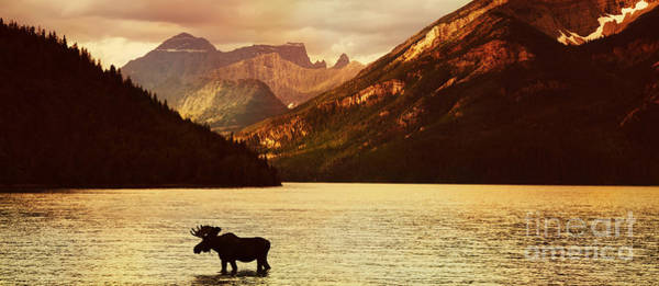 Wall Art - Photograph - Moose In Lake With High Mountains In by Hdsidesign