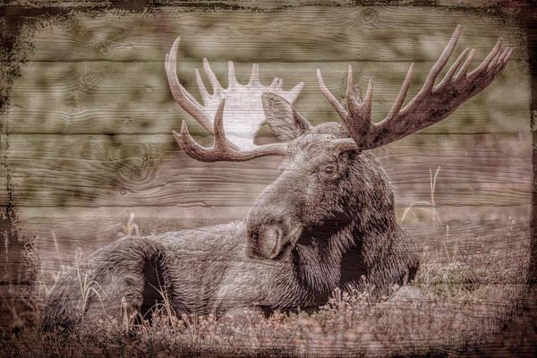 Digital Art - Moose In The Fields by Debra and Dave Vanderlaan
