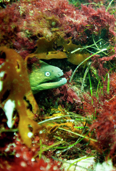 Photograph - Moray by Anthony Jones