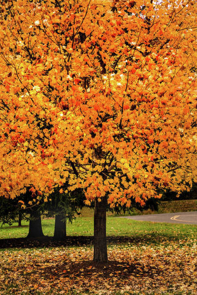 Photograph - More Autumn Gold by Don Johnson