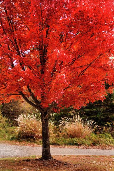 Photograph - More Autumn Orange by Don Johnson