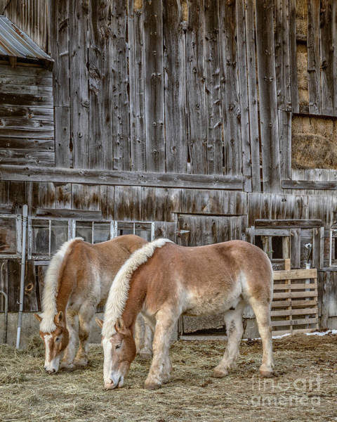 Wall Art - Photograph - Horses By The Barn Sugarbush Farm by Edward Fielding