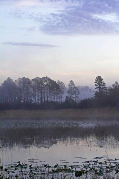 Photograph - Morning At Hopkins Prairie Pond by Paul Rebmann