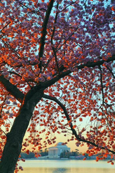 Wall Art - Photograph - Morning Blossoms by Mitch Cat